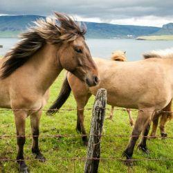 caballos1-990