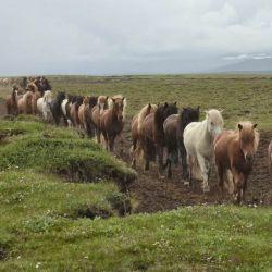 caballos6-990