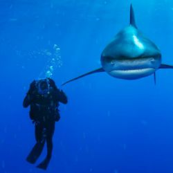 tiburon990week
