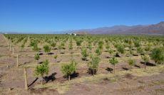 Altos de Tinogasta lanza un nuevo sector de inversiones.