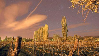 Técnica. El movimiento de los astros genera vinos que los sommeliers recomiendan cada vez más