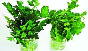 IDEAS ÚTILES | Aroma a fresco: perejil y cilantro.