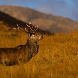 Red-Deer-005-Wild-West-Safari