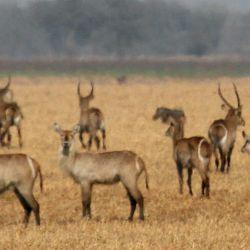 Animales salvajes en el Parque Nacional Gorongosa en Mozambique