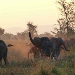 Elefantes en el Parque Nacional Gorongosa en Mozambique