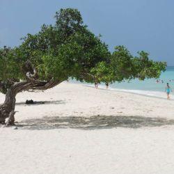 Aruba Fofoti