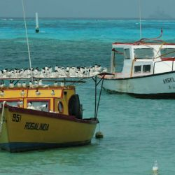 Aruba mar 1