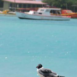 Aruba mar 7