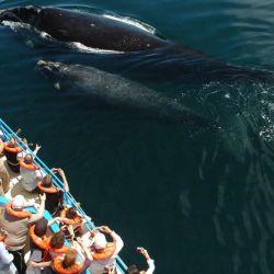 avistaje ballenas