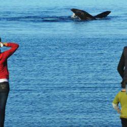 ballenas desde la costa