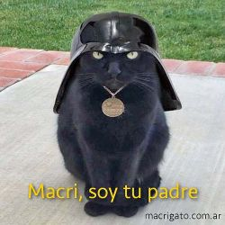 005-macri-gato