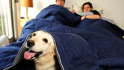 Mejores amigos. Historias de personas que suman al perro a la cama como uno más de la casa.