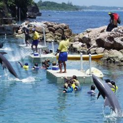 DOLPHINCOVE