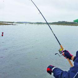 pesca tarariras (1)