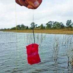 pesca tarariras (6)