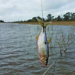 pesca tarariras (7)