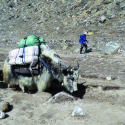 trekking everest (12)