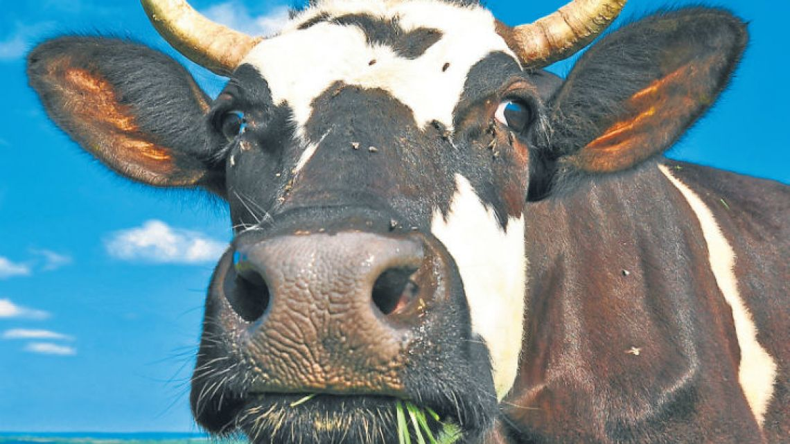 Sources in Europe and Argentina say that concerns from EU member states over how much beef the continent should be let in from South America are a major sticking point in the Mercosur trade deal talks.