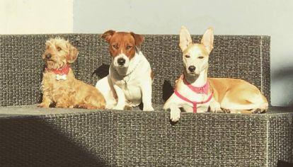 Perros en el hotel canino de Pilar.
