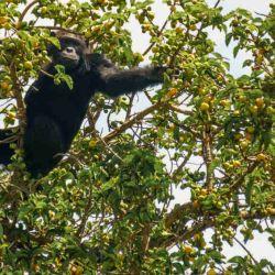 Chimpanc_s_y_elefant_55203968(2)