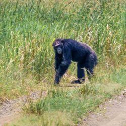 Chimpanc_s_y_elefant_55203968(3)