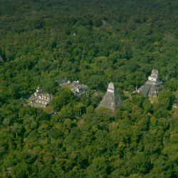 Peten Guatemala - Antes árboles de Titakl (Crédito Wild Blue Media) Tesoros Perdidos de los Mayas (2)