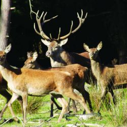 red deer Oct 2013 (8)