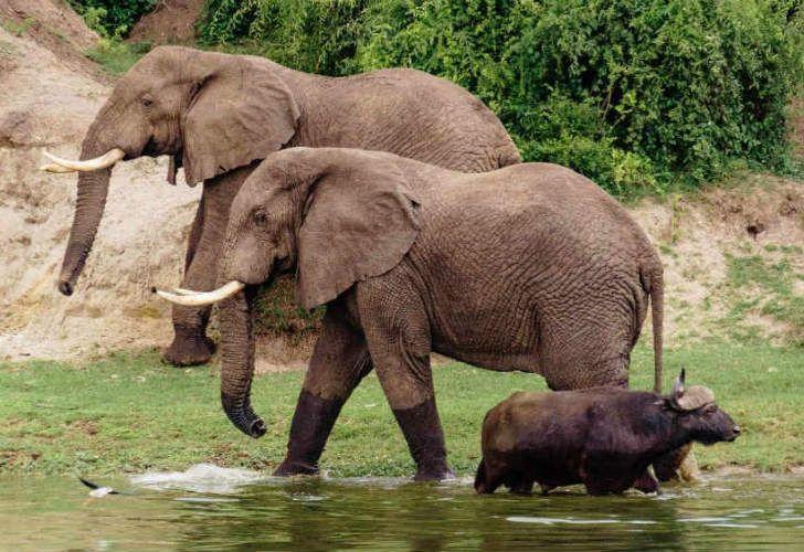 Botsuana busca respuestas a su población de elefantes