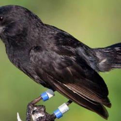 Aves-Nueva-Especie