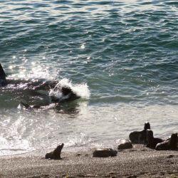 Orcas en punta norte con camion 4x4
