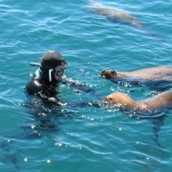 Snorkeling con lobitos de mar (Abramar) 37