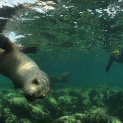Snorkeling con lobitos de mar (Abramar 41)