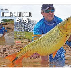 WEE-0546-041-POLLERO DORADO-v2
