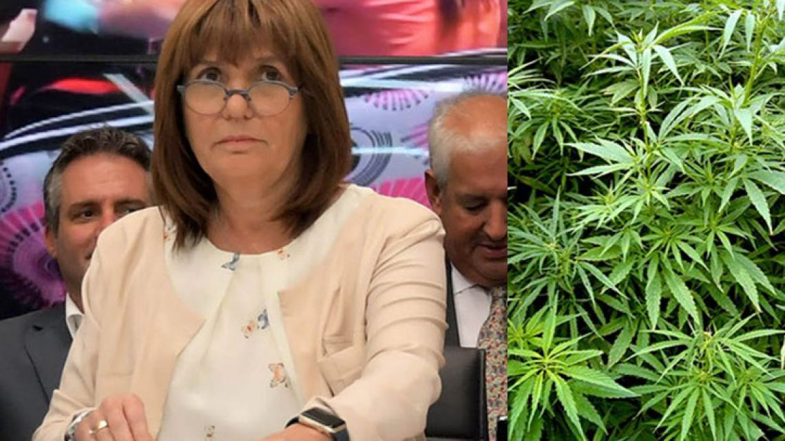 The Security Ministry led by Patricia Bullrich (left) is accused of impeding the importation and cultivation of marijuana (right) for medical purposes.