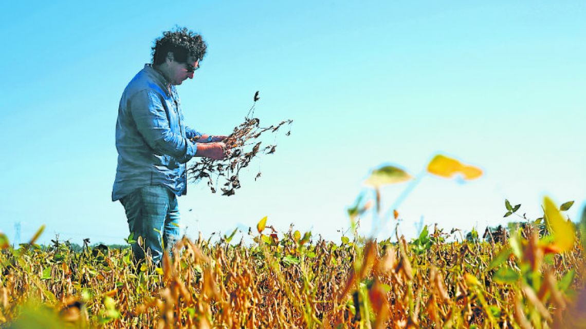 Jorge Josifovich, a farmer and agricultural engineer who provides advice to growers, looks at drought-affected soy near Pergamino, Buenos Aires province.