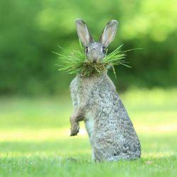 25 conejo