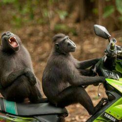 40 monos-en-moto