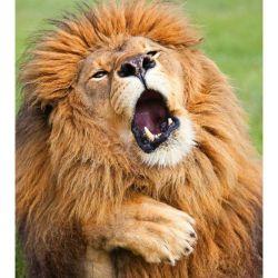 7 leon