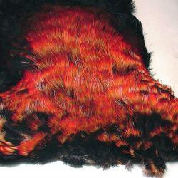 Fragmento de pecho de yacutoro traficado para vender sus plumas
