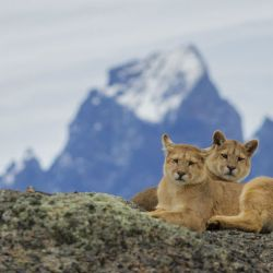 Patagonia salvage