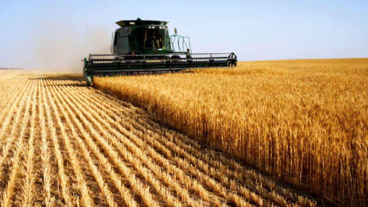 cosecha-trigo-1