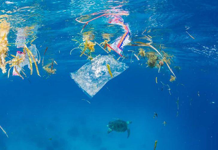 Se encontró plástico en el punto más alejado del Océano Pacífico.