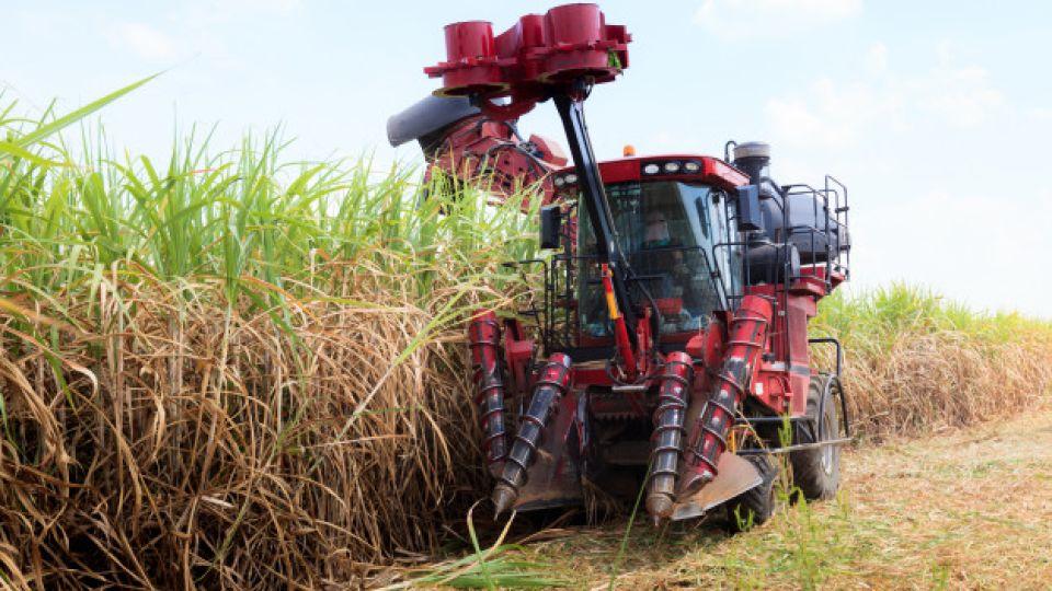 """CAÑA DE AZÚCAR. """"Los Balcanes"""" posee 50 cosechadoras de caña para la recolección. El 85% de la cosecha de caña se realiza con máquinas."""