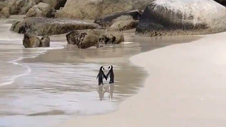 Pinguinos d ela mano07052018