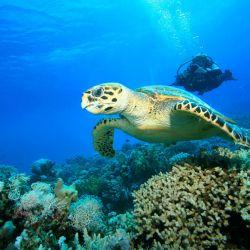 Las tortugas marinas tienen su santuario-pic41