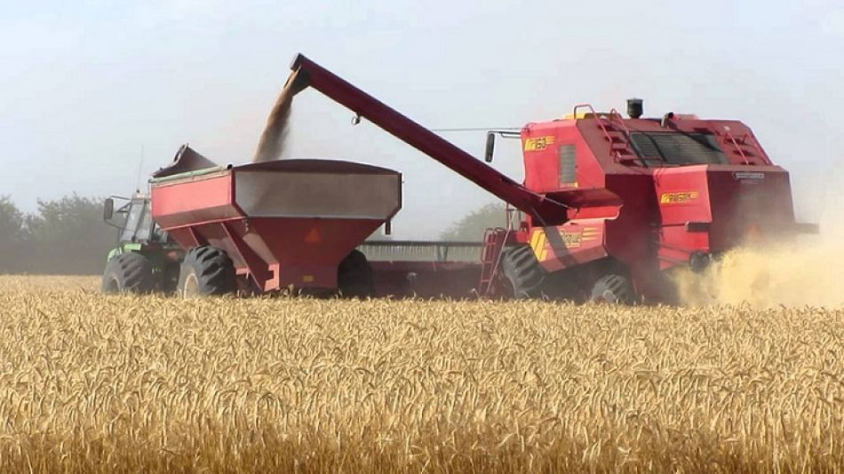 La siembra de granos finos culminó con más de 7 millones de hectáreas.