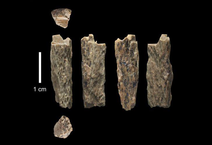 neandertal denisovano