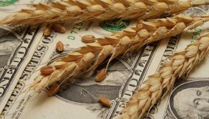 GRANOS RETENIDOS. Los productores agropecuarios tienen sin vender unas 33 millones de toneladas por un valor de US$7.935 millones, que mejoró considerablemente gracias a la última devaluación.