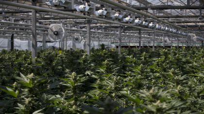 Destrona En Firma La Y A Tilray De Se Canopy Más Convierte Cannabis HY9eWID2E