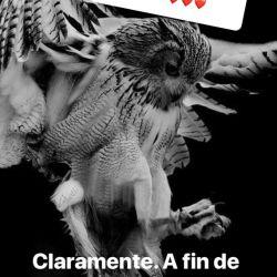 1001_Candelaria_Tinelli_2